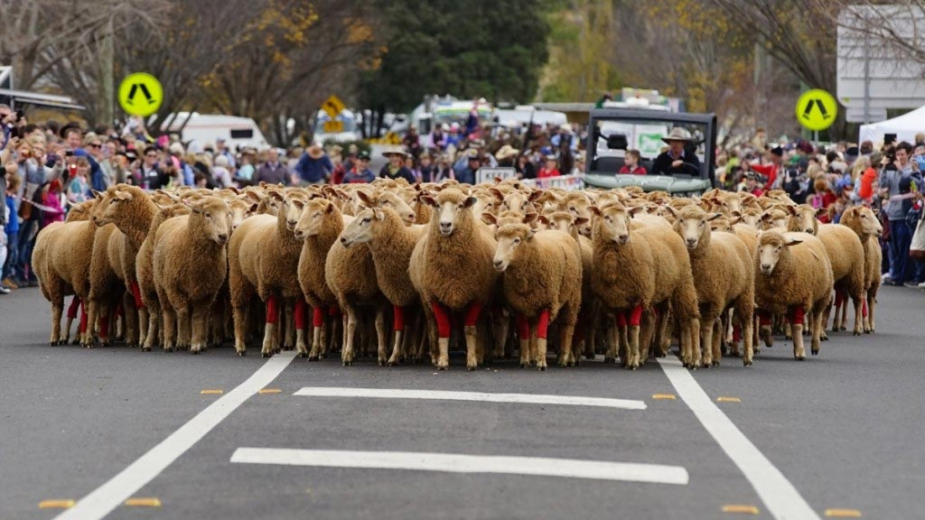 What's On in the Upper Hunter - Festival of the Fleeces