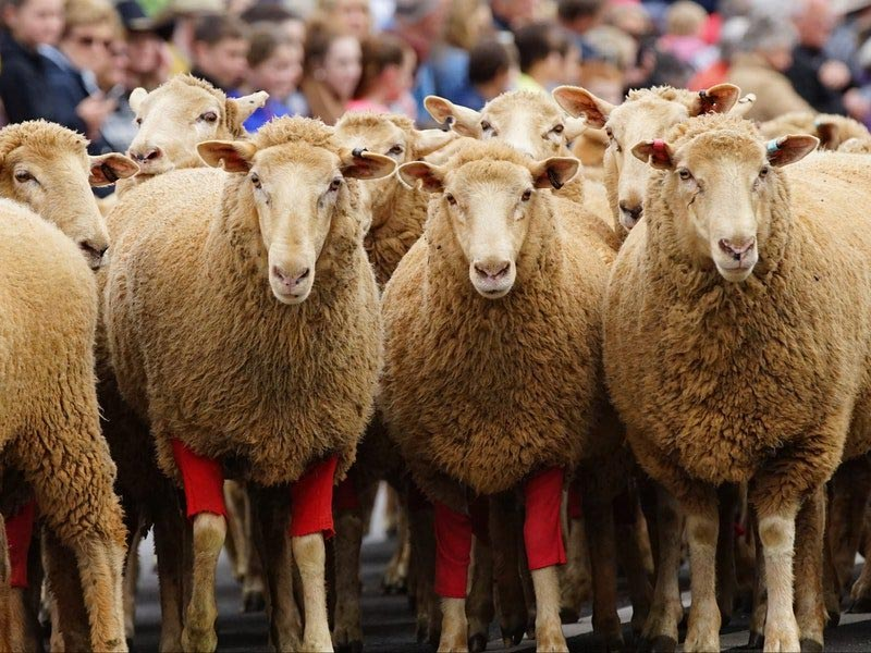 Merriwa Festival of the Fleeces - Upper Hunter Festivals and Events